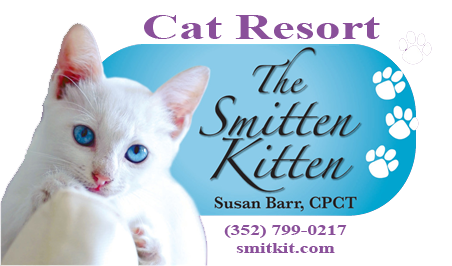 The Smitten Kitten – Cat Resort