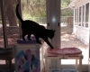 Cat Resort Gallery 1